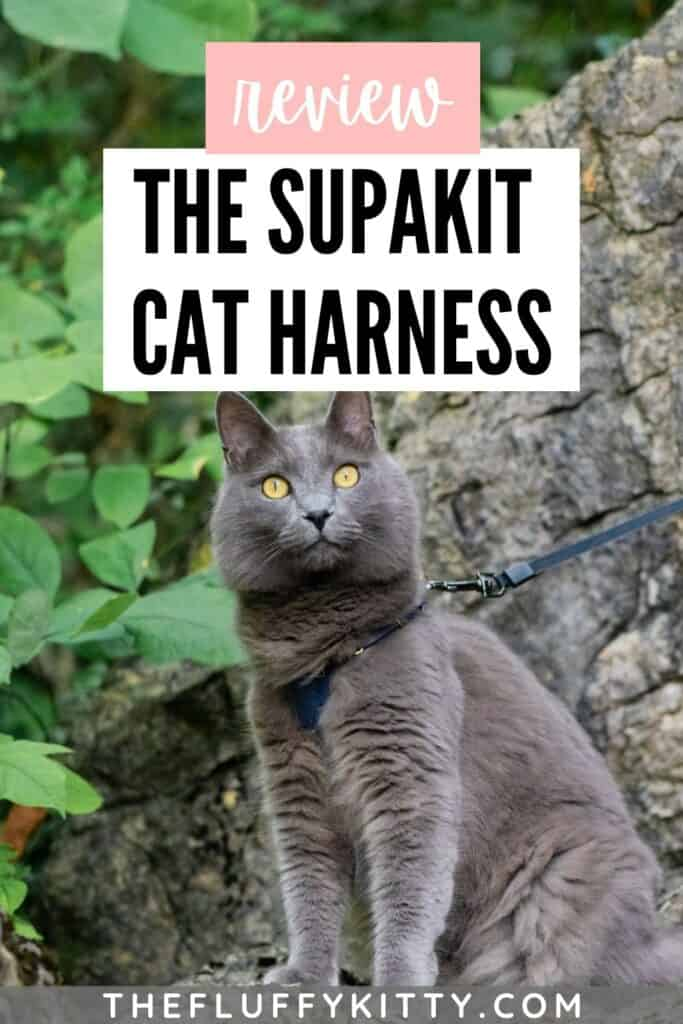 gray cat wearing cat harness with text overlay