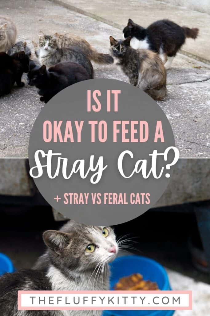 stray cats on street, image with text overlay