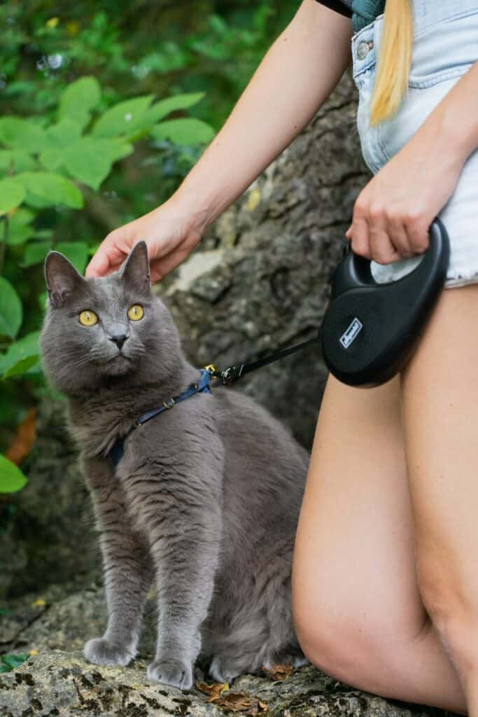 woman petting gray cat on leash