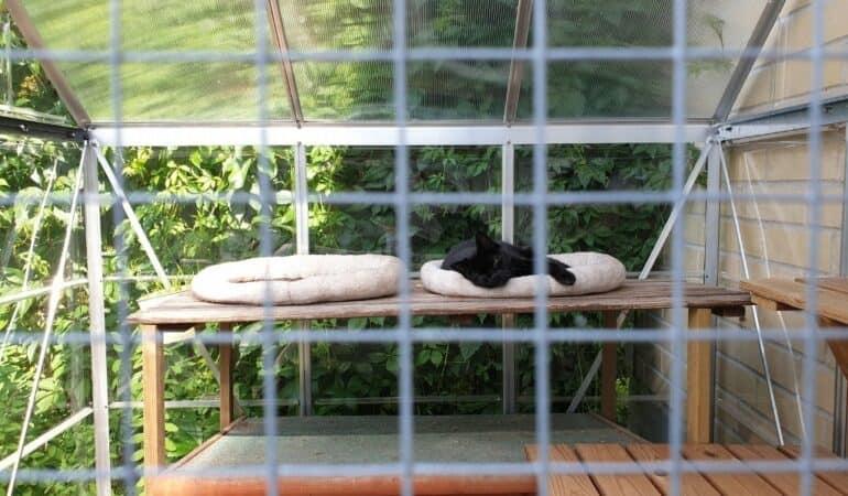 black cat lounging in outdoor catio