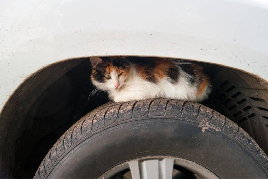 stray cat sitting on car tire