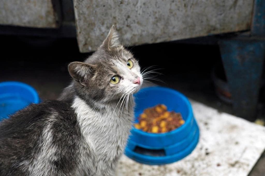 Guía para diferenciar gatos asilvestrados, callejeros o domésticos
