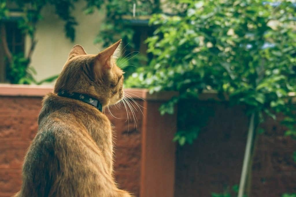 cat looking out thinking about the world