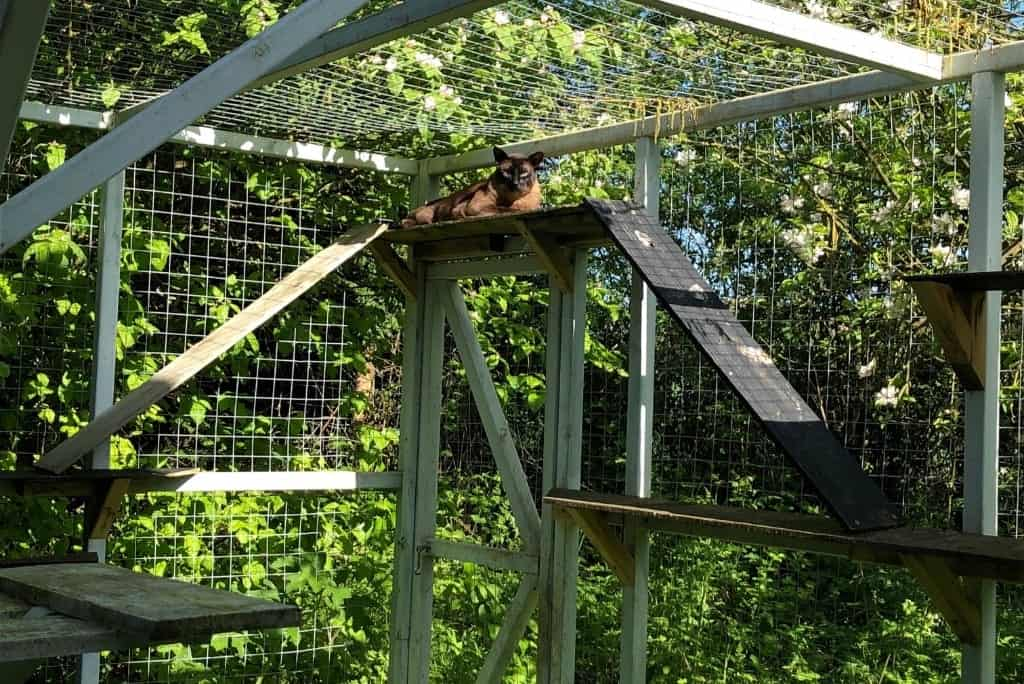 backyard catio outdoor cat enclosure