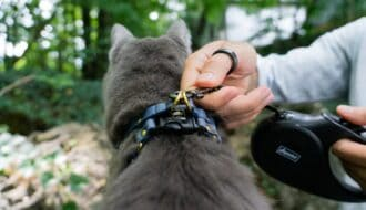man attaching cat leash to cat harness on cat