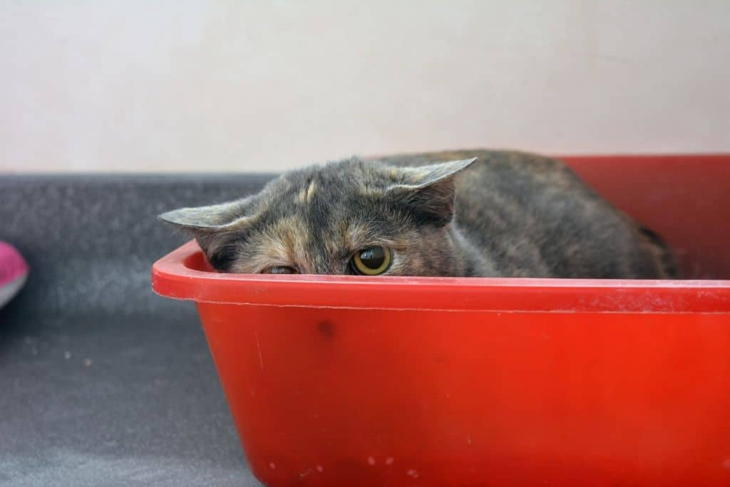 scared stressed cat hiding in red litter box