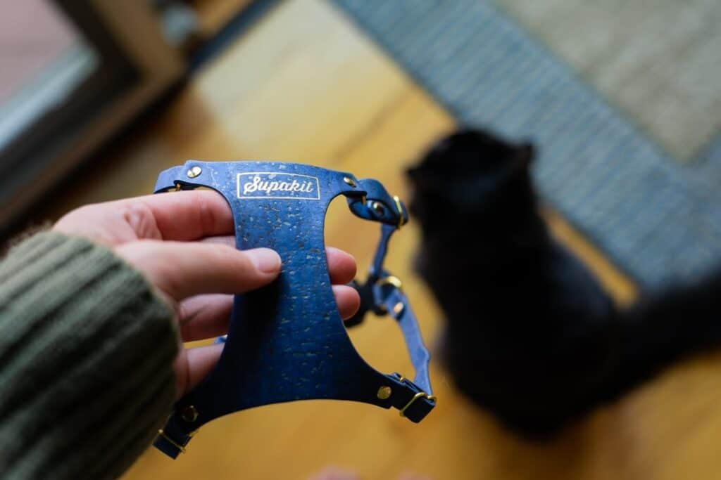 girl holding blue supakit harness with black cat on floor