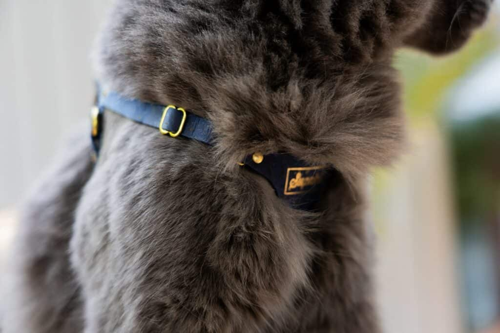 Supakit harness on gray cat's chest