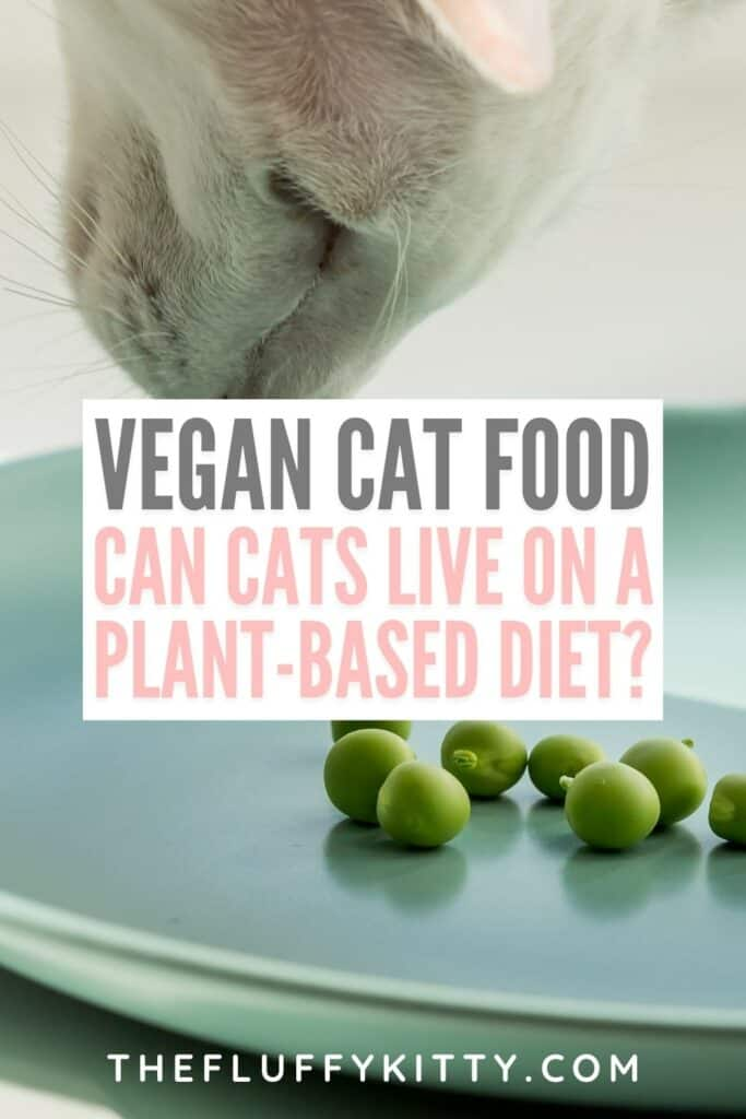 cat looking at green peas on plate with text overlay 'vegan cat food - can cats live on a plant based diet'