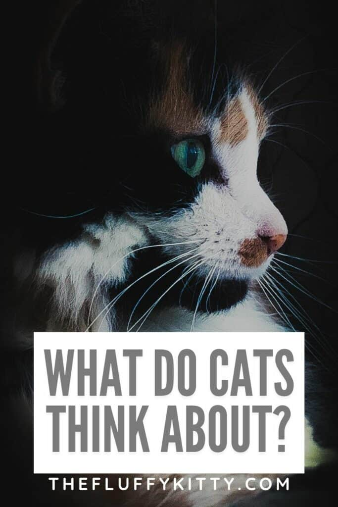 portrait of cat with text overly 'what do cats think about'