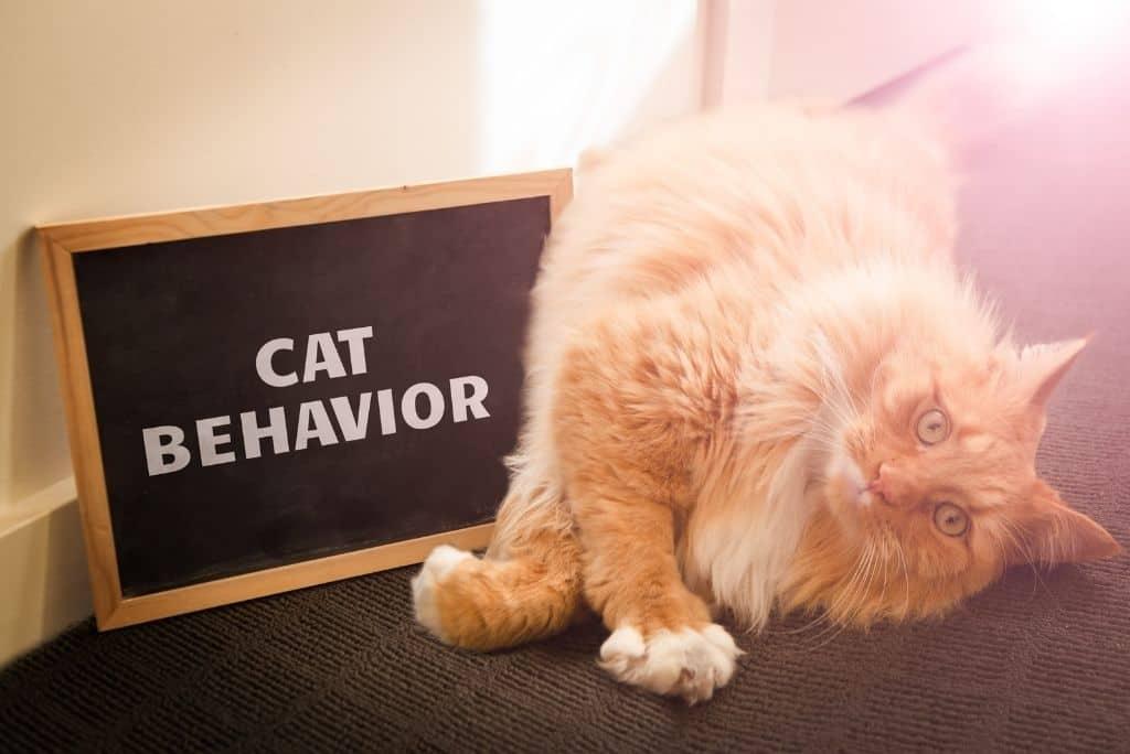 orange cat laying next to sign displaying words cat behavior