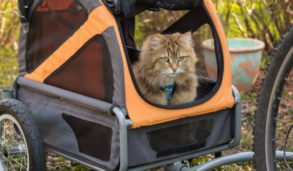 cat inside pet trailer with wheels getting pulled by a bicycle
