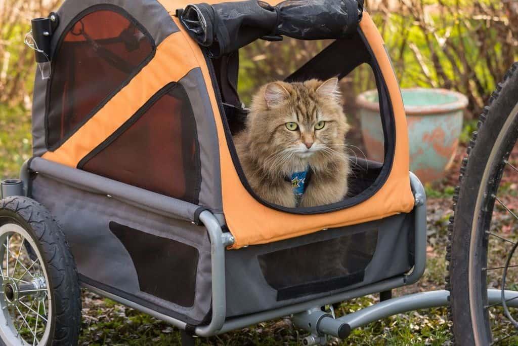 Guía completa para llevar a tu gato de paseo en bicicleta