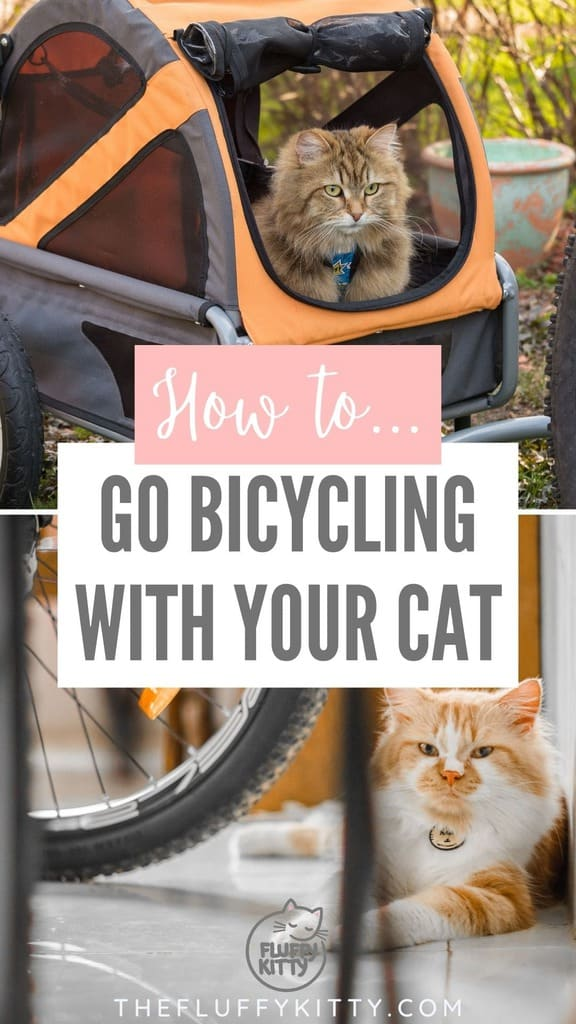grid of cats and bikes