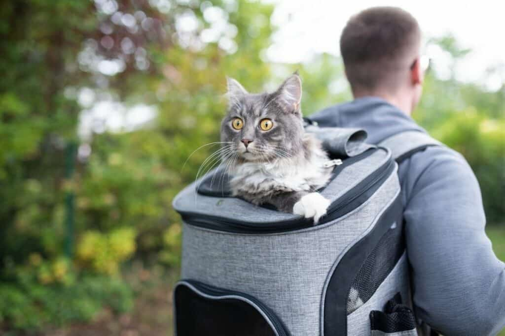 man wearing a cat backpack while hiking and biking with a cat