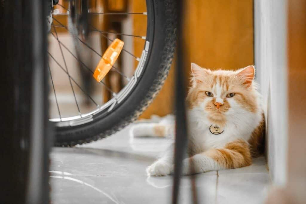 orange and white cat sitting on floor beside bicycle wheel
