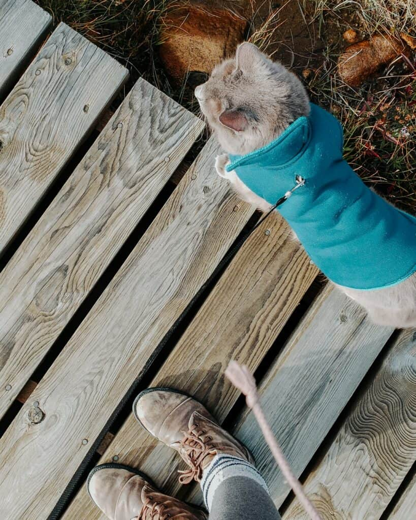 woman standing next to her cat wearing jacket while hiking outside
