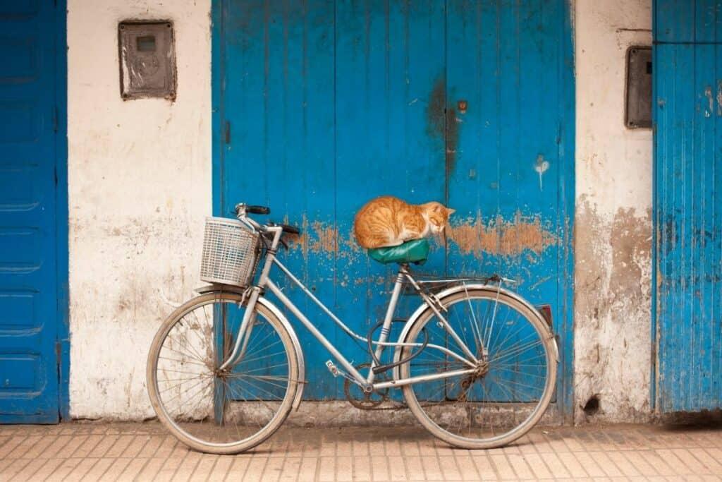 orange cat sleeping on seat of vintage bicycle in front of blue doors