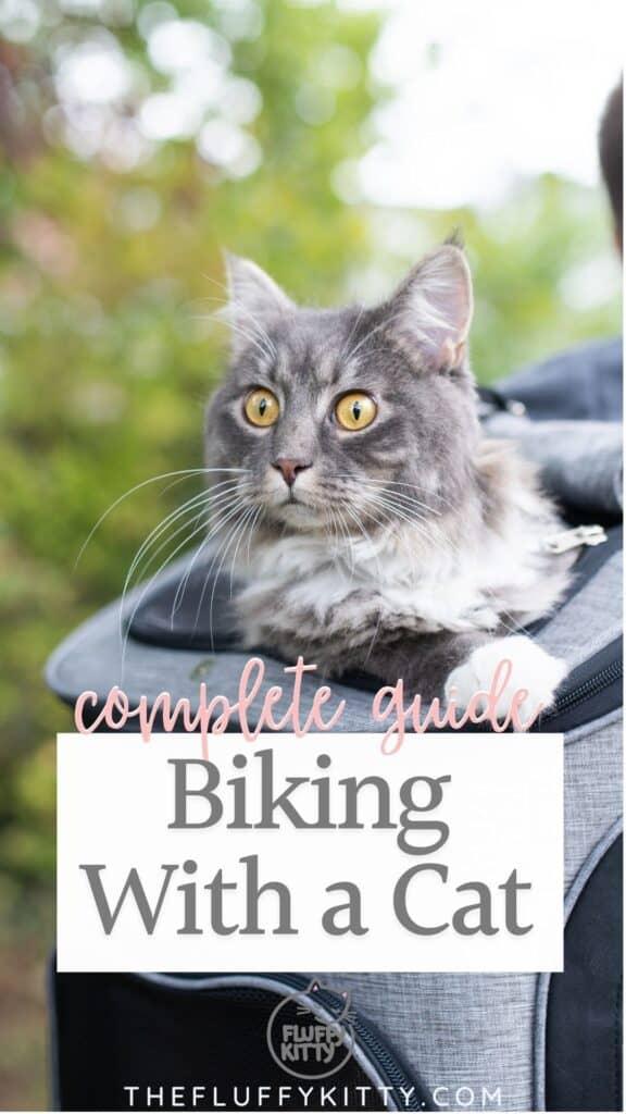 cat inside cat backpack going on bike ride