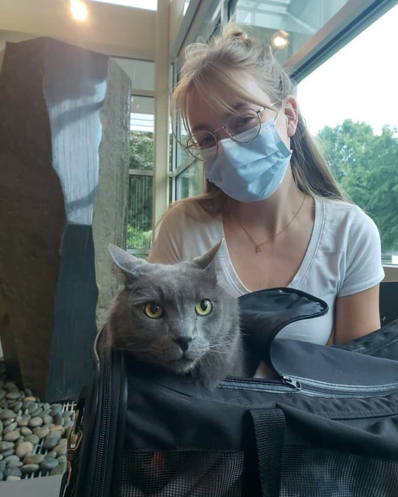 grey cat and owner at the vet